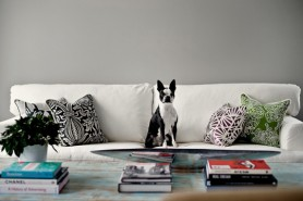 pets-on-furniture